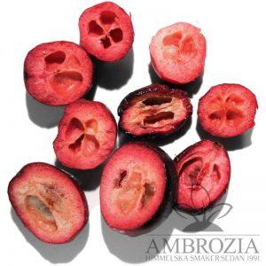 Tranbär frystorkade