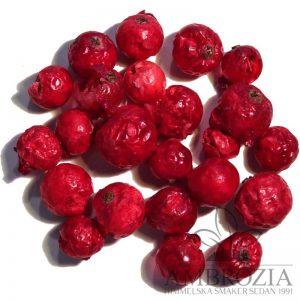 Röda vinbär frystorkade red currant